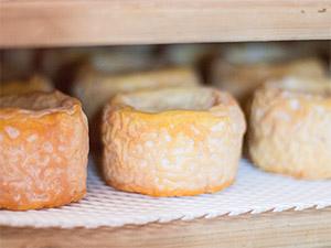 Käse, die Geheimwaffe von Volker Waltmann