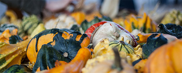 bunte Kürbisse beim Herbstzauber in Veitsbronn OT Raindorf