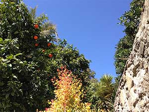 Orangen Baum Malaga