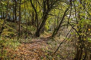 überwachsener Wanderweg Gärtental
