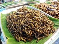 streetfood-thailand-phuket-impression-16