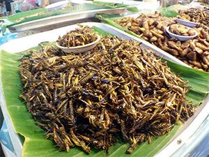 Insekten auf dem Night-Market