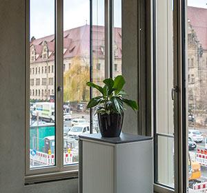 Pflanze vor Fenster