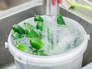 Gurkern werden gewaschen