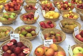 Titelbild Apfelmarkt 2015